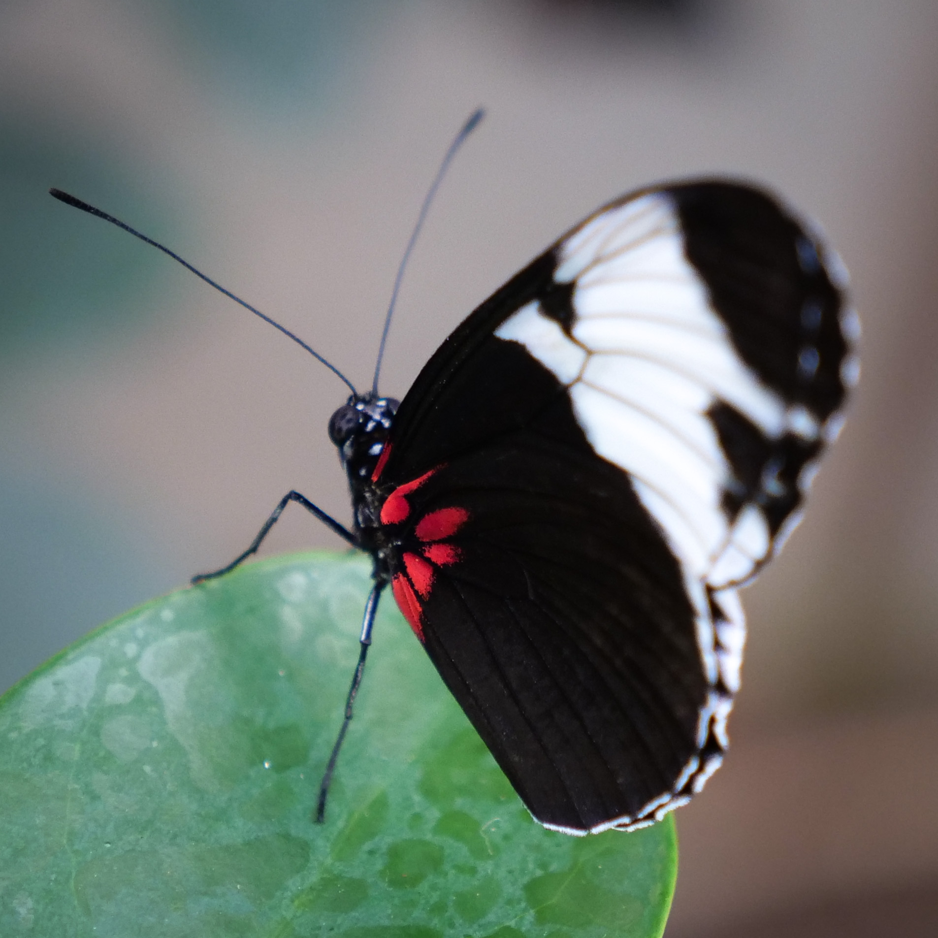 butterfly house and marine cove open house! – creative animal