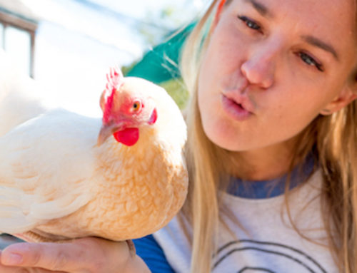 Can Chickens Help You Live More Sustainably?