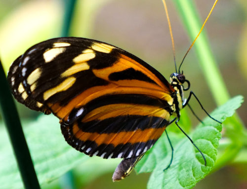 Butterfly House and Marine Cove Open House!